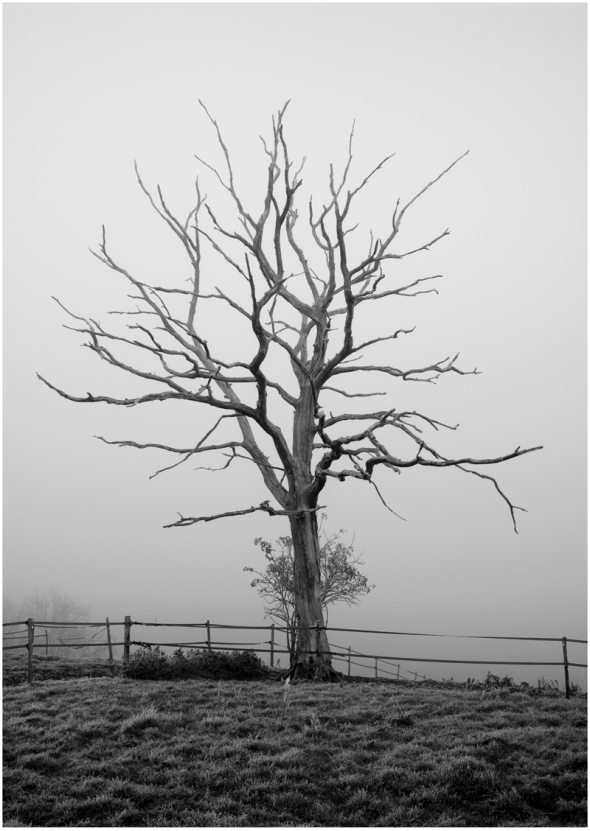 Dead_tree_by_phil_quinn